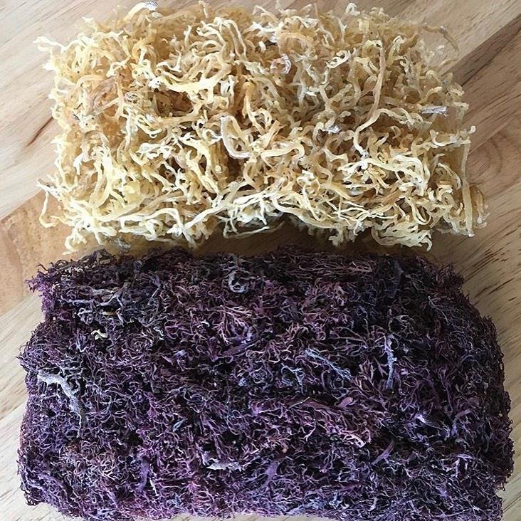 How To Use Sea Moss Slowpacelifestyle Com Irish Sea Moss Sea Weed